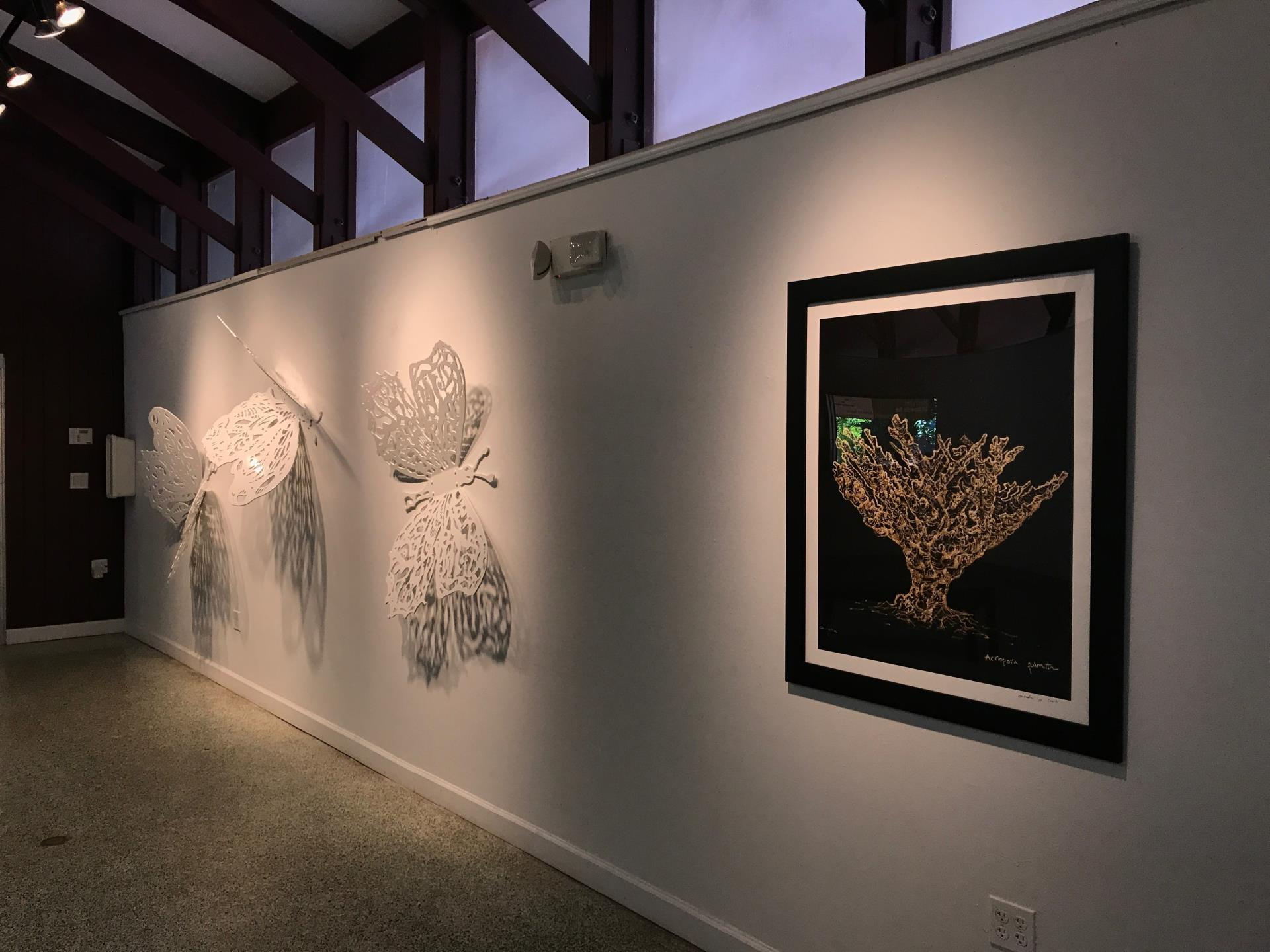 HIBISCUS GALLERY